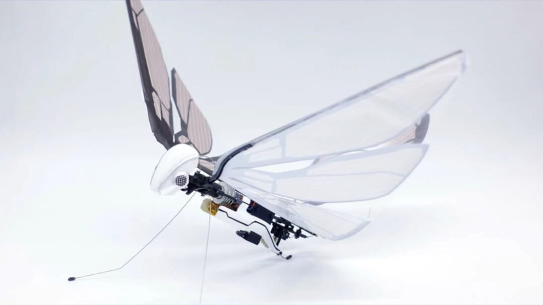 Dron-ważka. Tym owadem możesz sterować