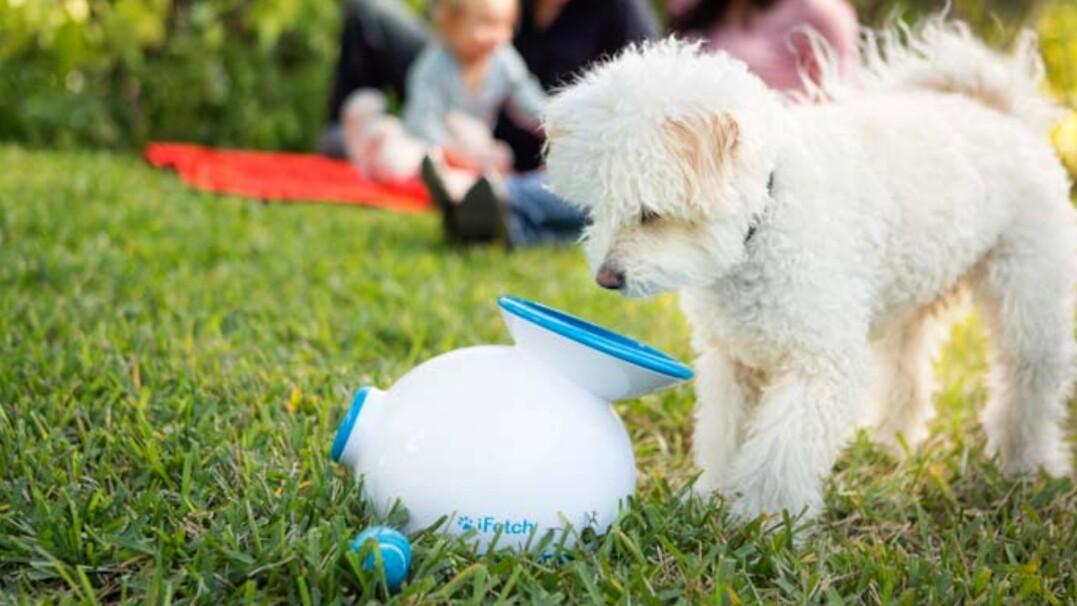 Maszyna, która rzuca piłki. Twój pies ją pokocha