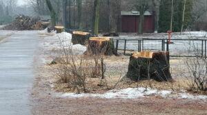 Główna aleja w zoo ogołocona z drzew